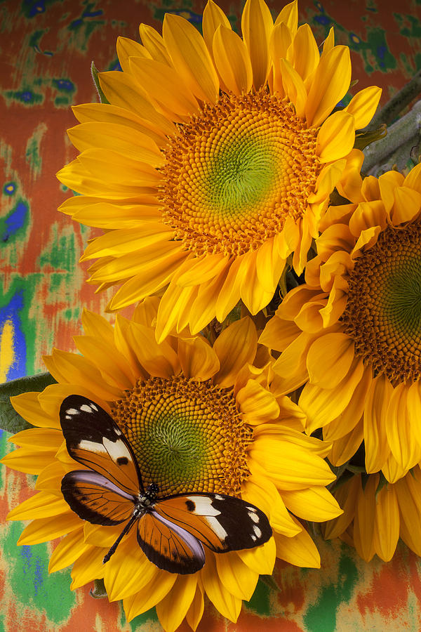 Orange Black Butterfly And Sunflowers Photograph  - Orange Black Butterfly And Sunflowers Fine Art Print