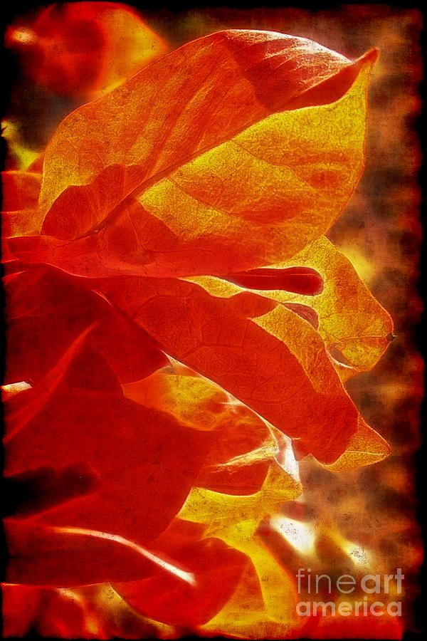 Texture Photograph - Orange Bouganvillea by Judi Bagwell