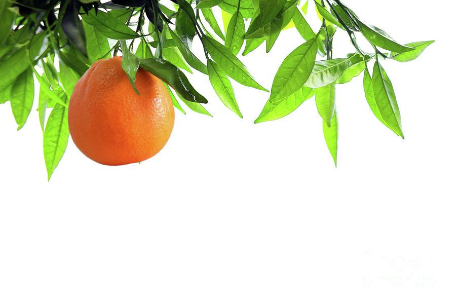 Orange Branch Photograph