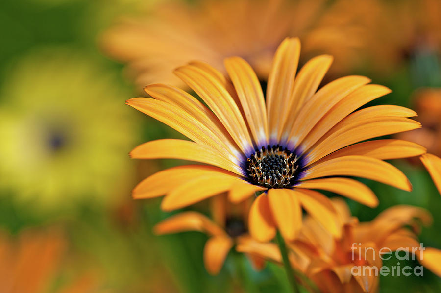 Orange Crush Photograph  - Orange Crush Fine Art Print
