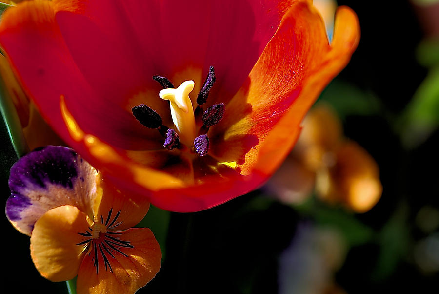 Orange Delight Photograph  - Orange Delight Fine Art Print