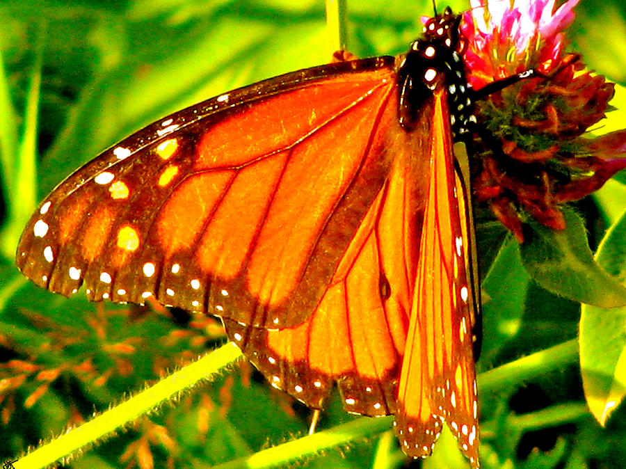 Orange Winged Butterfly Photograph