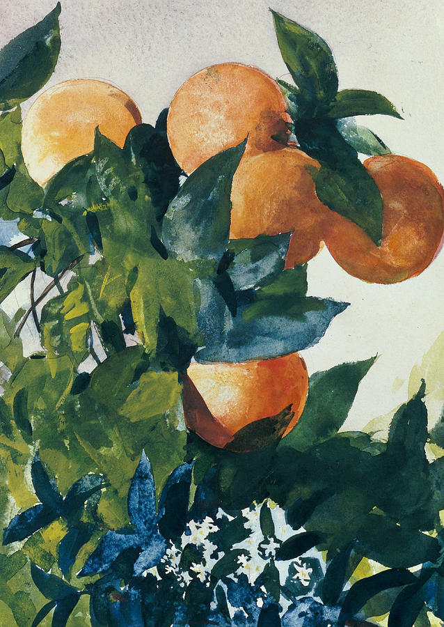 Oranges On A Branch Painting  - Oranges On A Branch Fine Art Print