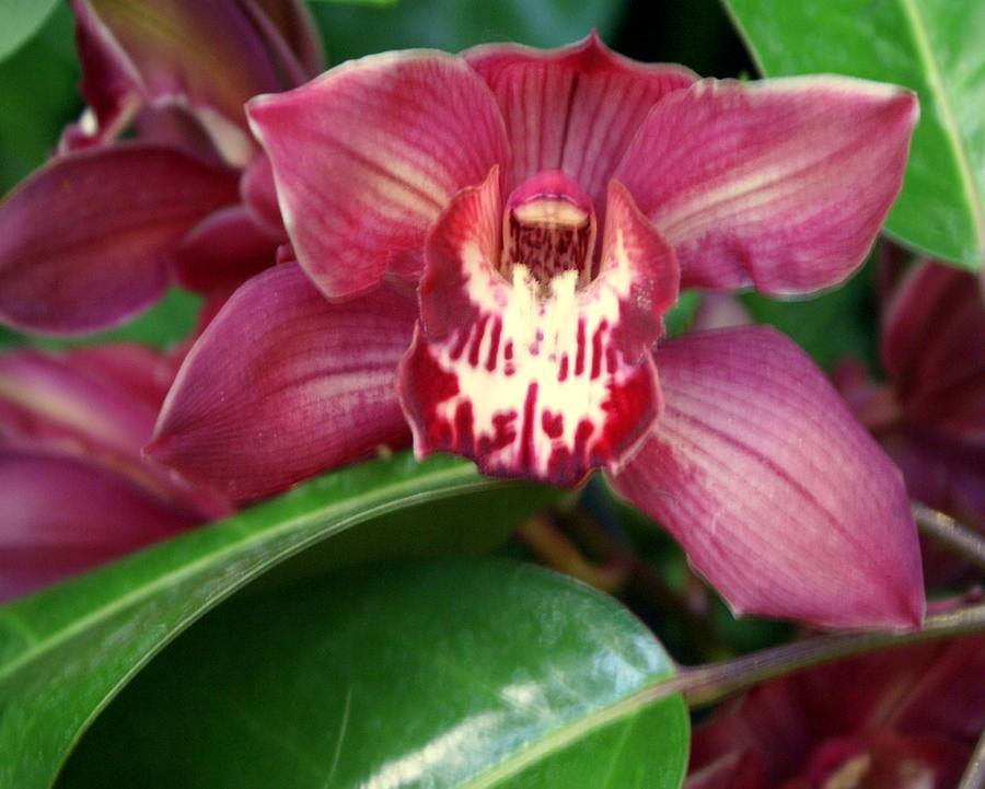 Orchid 10 Photograph
