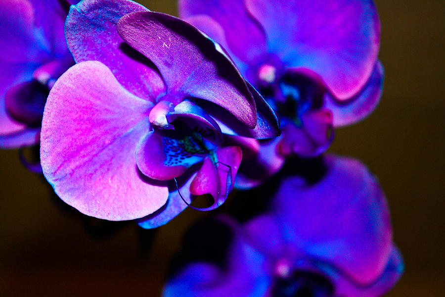 Orchid Photograph - Orchid #2 by David Alexander