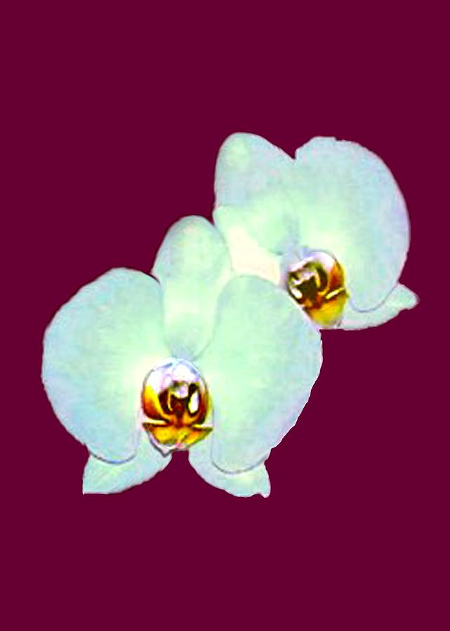 Orchid Art 5 Purple Zurich 2000 Jgibney The Museum Zazzle Gifts Mixed Media  - Orchid Art 5 Purple Zurich 2000 Jgibney The Museum Zazzle Gifts Fine Art Print