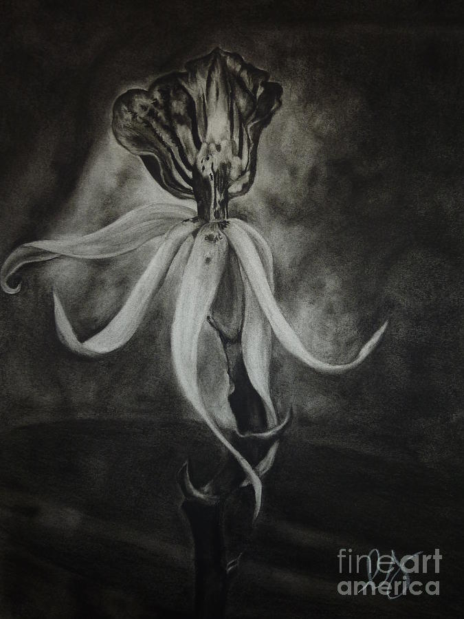 Orchid In Black-and-white Drawing  - Orchid In Black-and-white Fine Art Print