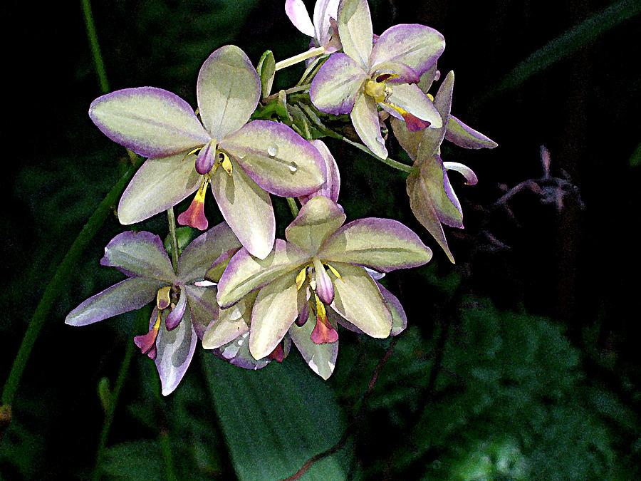 Orchidaceae Digital Art