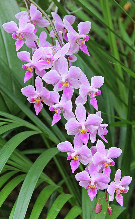 Becky Photograph - Orchids 15 by Becky Lodes