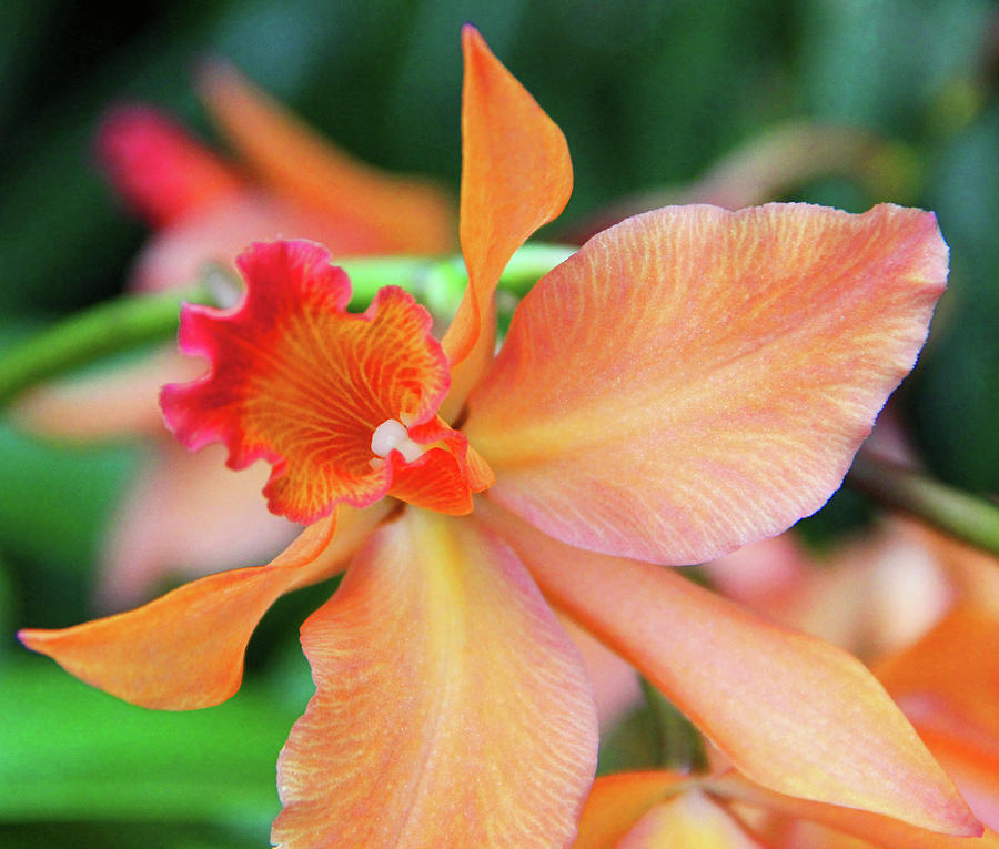Becky Photograph - Orchids 25 by Becky Lodes