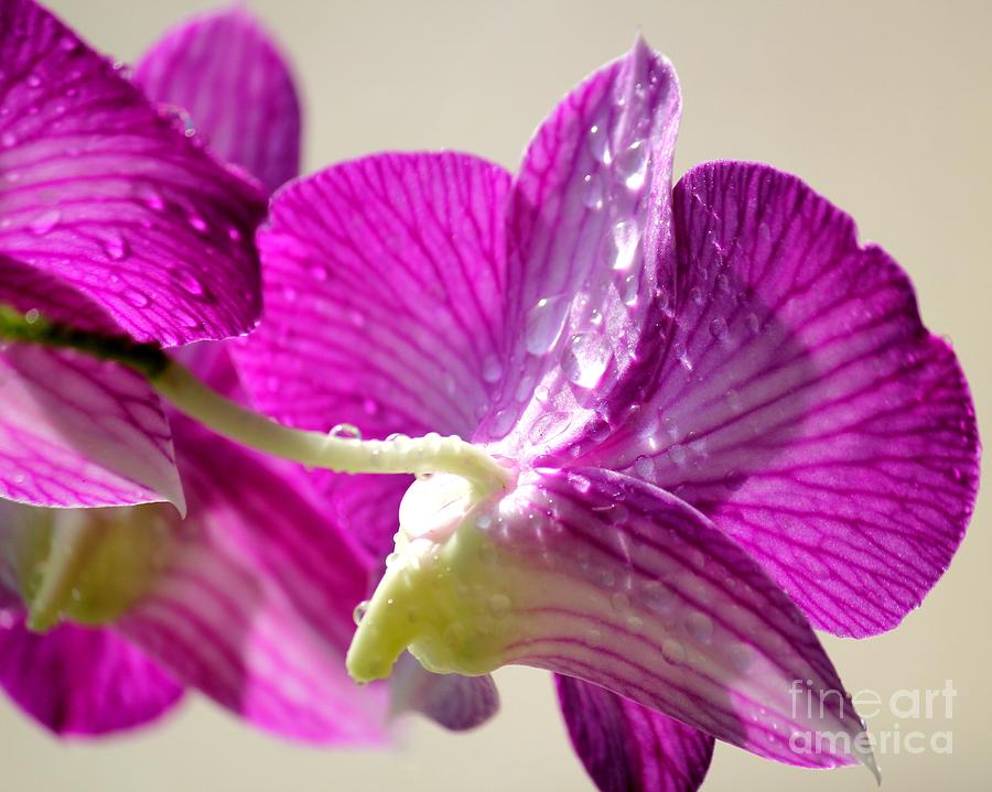 Orchids And Raindrops Photograph