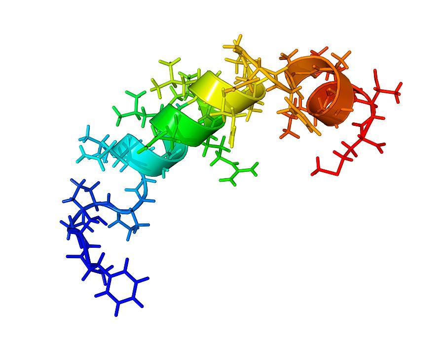 Orexin-b Hormone Molecule Photograph