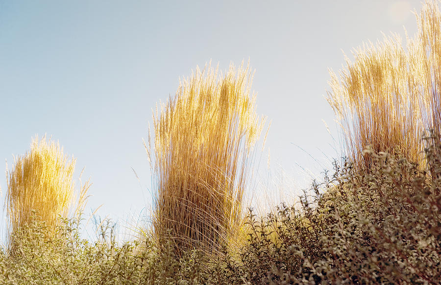 Ornamental Grasses 2 Photograph By Gary Rose