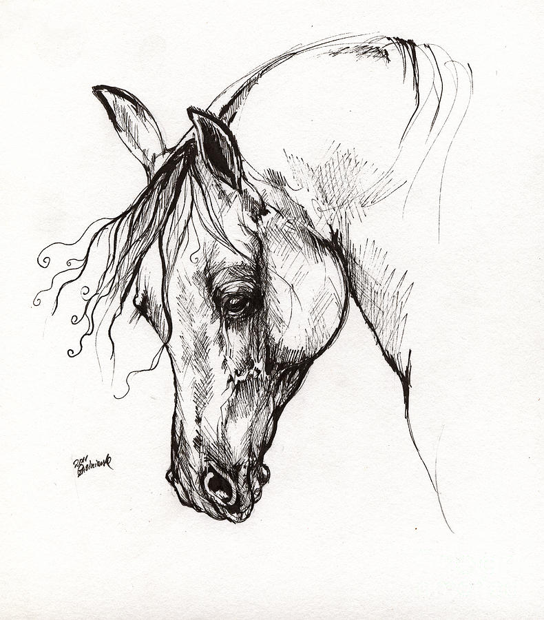 Ostragon Polish Arabian Horse 1 Drawing