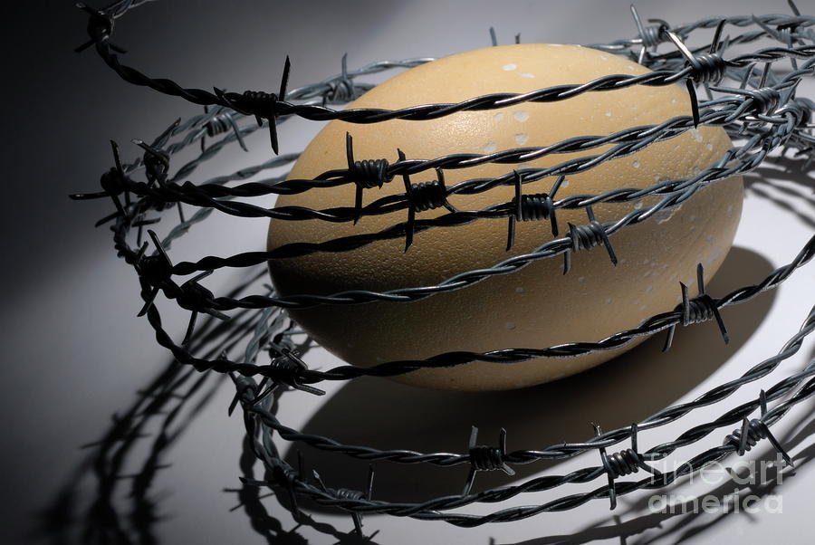 Ostrich Egg Surrounded By Barbed Wire Photograph
