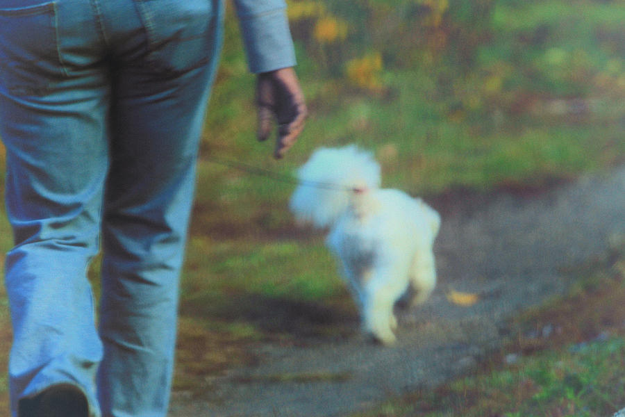 Action Photograph - Out For A Stroll by Karol Livote