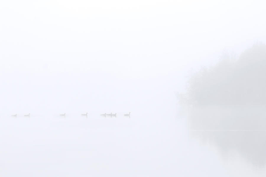 Out Of The Fog Photograph  - Out Of The Fog Fine Art Print