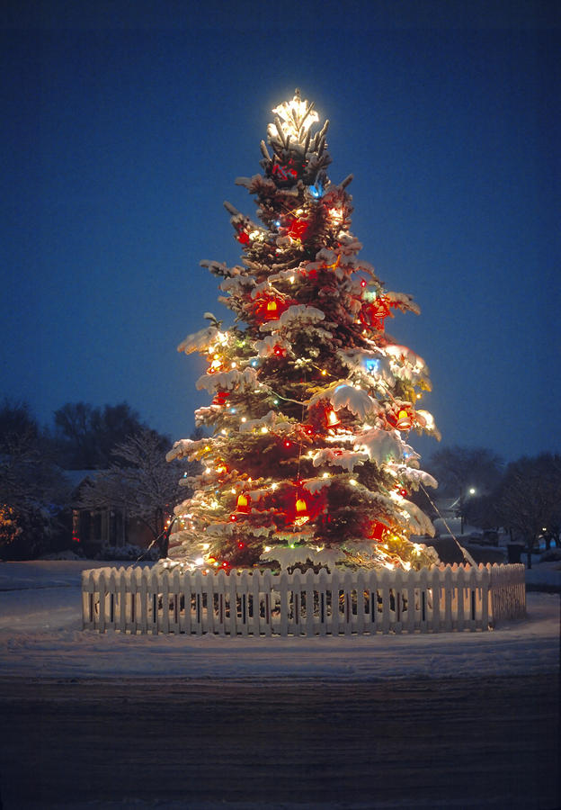 Outdoor Christmas Tree Photograph  - Outdoor Christmas Tree Fine Art Print