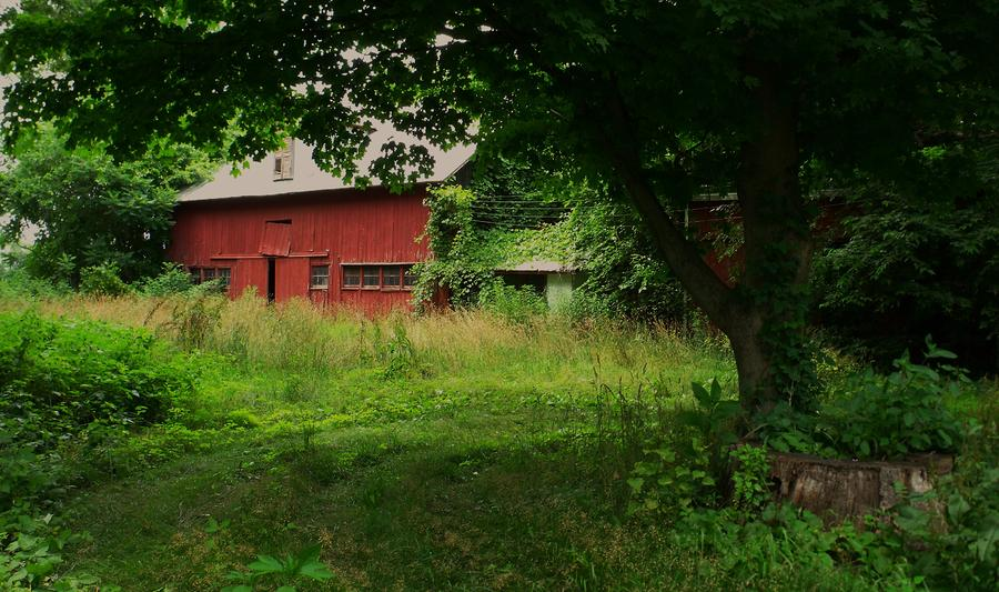 Red Barn Photograph - Overgrown by Anna Villarreal Garbis