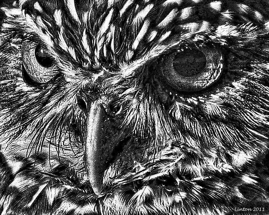 Owl Eyes Paintings Owl Eyes Digital Art