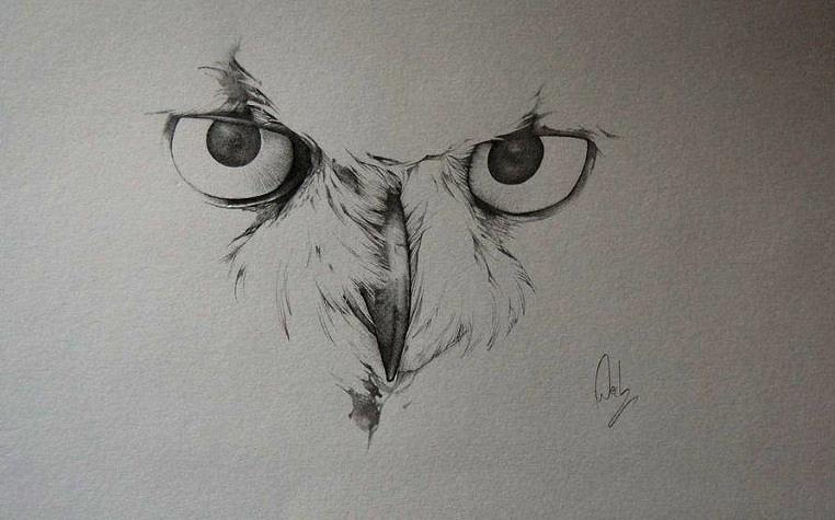 image gallery owl sketch drawing