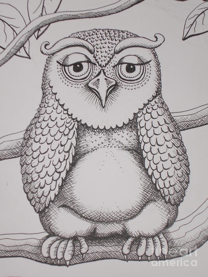Owl sketch drawing by barbara stirrup for Cool drawings of owls