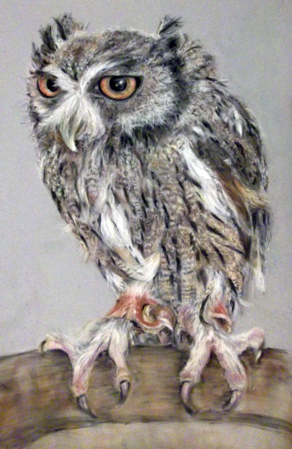 Owl Pastel - Owl by Tanya Patey