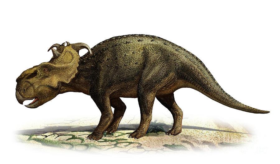 Fasolasuchus Vs Pachyrhinosaurus