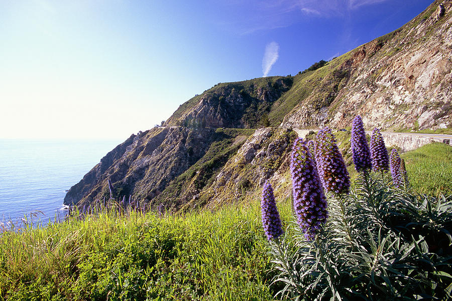 Pacific Coast View With Blue Wildflowers Photograph  - Pacific Coast View With Blue Wildflowers Fine Art Print