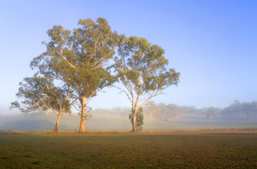 Paddock Sunrise Photograph