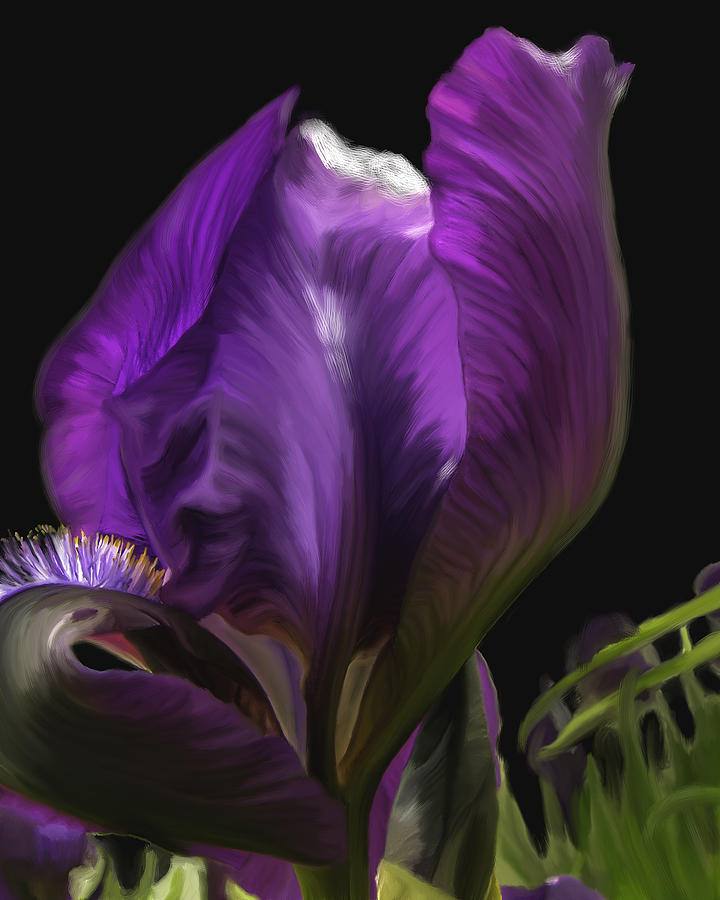 Painted Iris Digital Art  - Painted Iris Fine Art Print