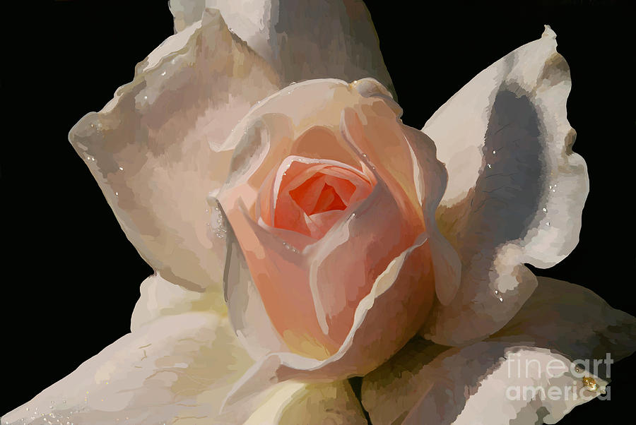 Painted Rose Digital Art  - Painted Rose Fine Art Print