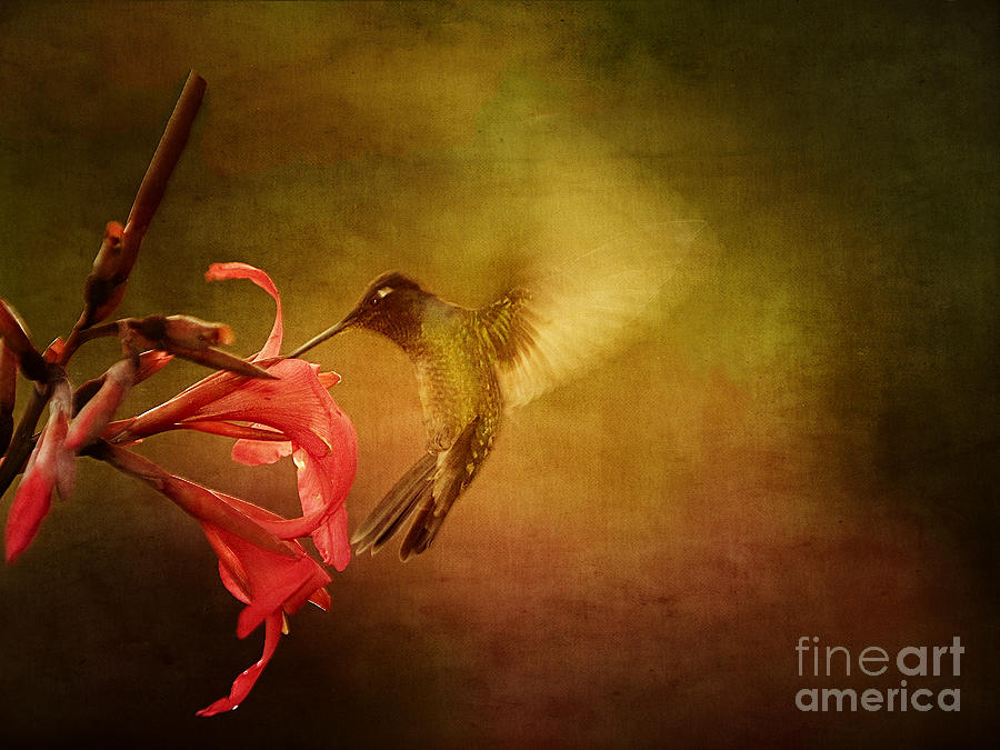 Painterly Photograph - Painterly Hummingbird #2 by Anne Rodkin
