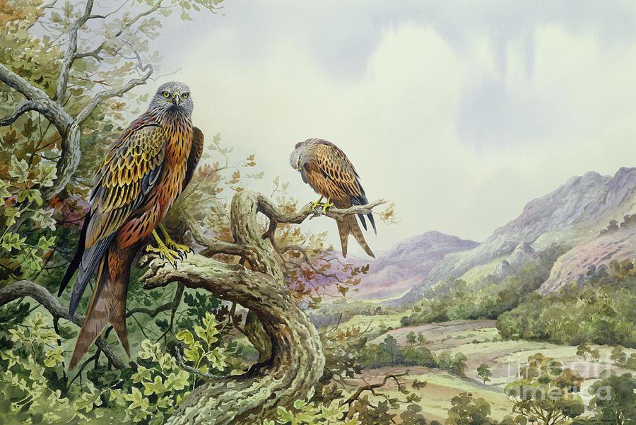 Pair Of Red Kites In An Oak Tree Painting