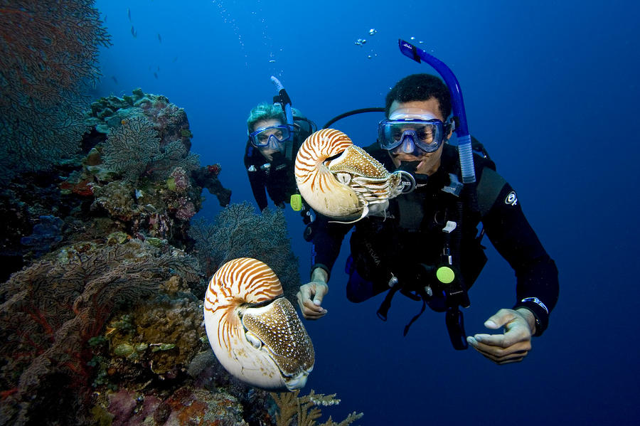 Palau Underwater Photograph
