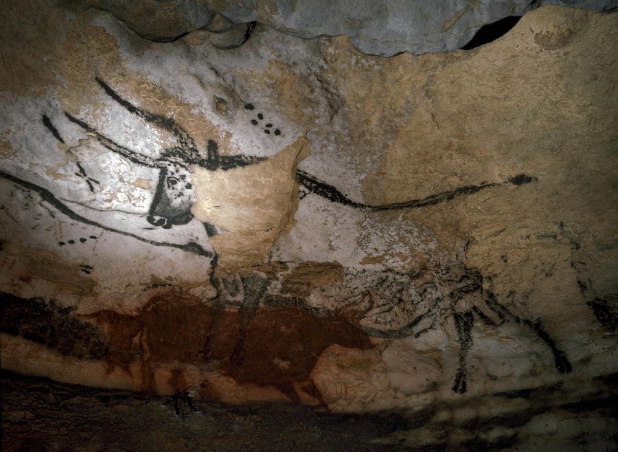 Paleolithic Art Of Bulls On Calcite Photograph