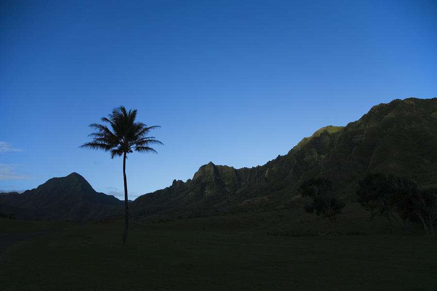 Palm And Blue Sky Photograph