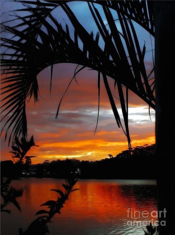 Palm Framed Sunset Photograph