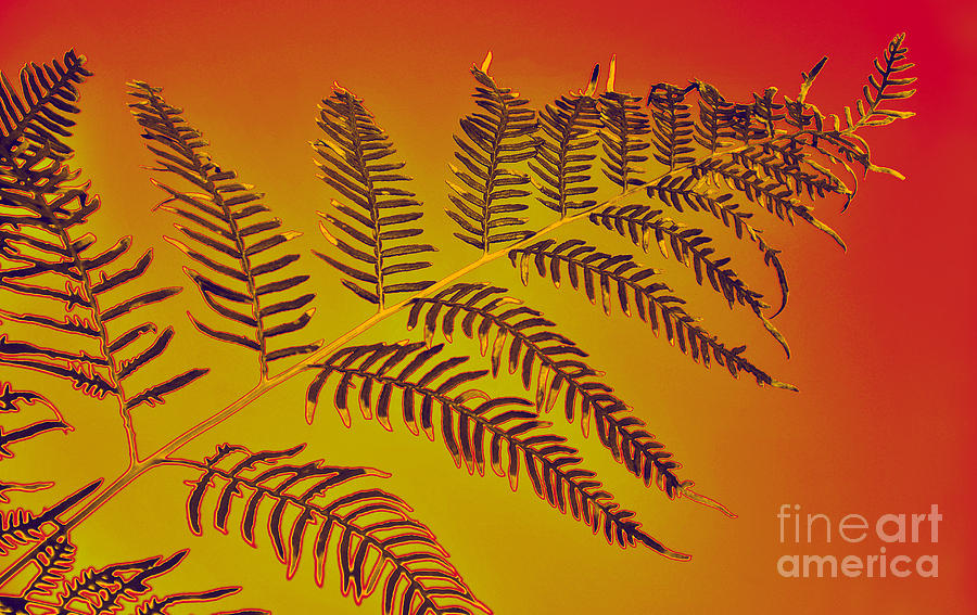 Palm Frond In The Summer Heat Photograph  - Palm Frond In The Summer Heat Fine Art Print
