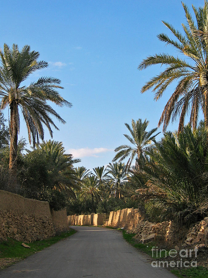 Palm Gardens In Palmyra Oasis Photograph  - Palm Gardens In Palmyra Oasis Fine Art Print