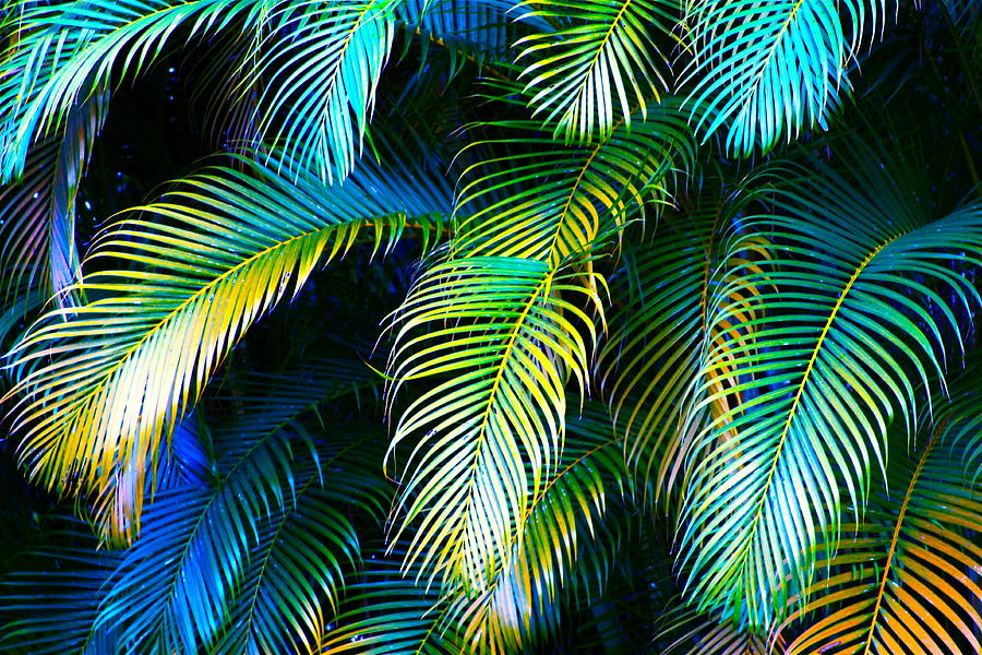 Palm Leaves In Blue Photograph