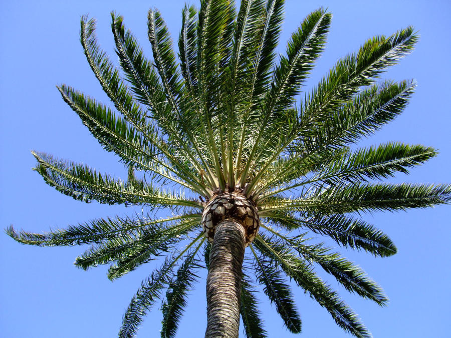 Palm Photograph  - Palm Fine Art Print