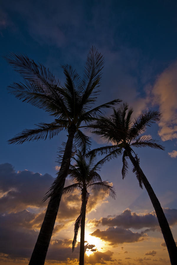 Palm Sunrise Photograph  - Palm Sunrise Fine Art Print
