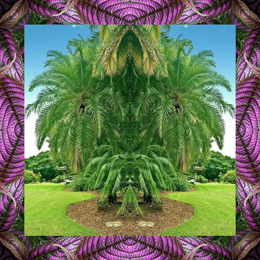 Palm Tree Ally Photograph