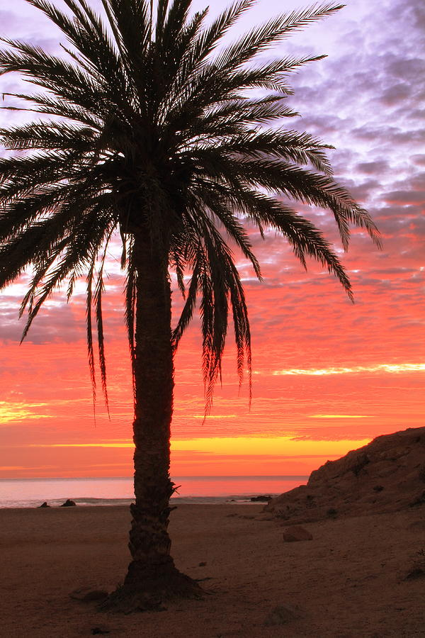 Palm Tree And Dawn Sky Photograph  - Palm Tree And Dawn Sky Fine Art Print