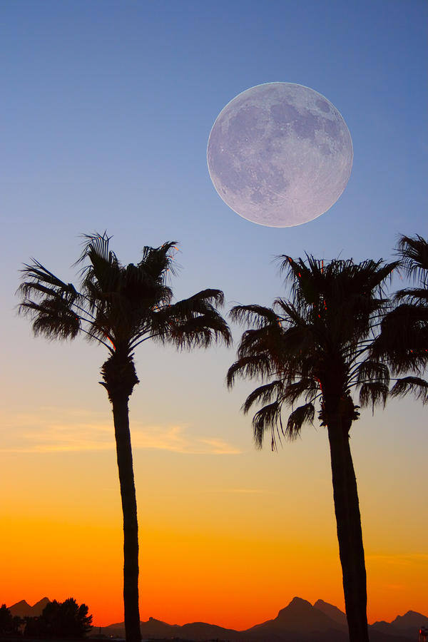 Palm Tree Full Moon Sunset Photograph