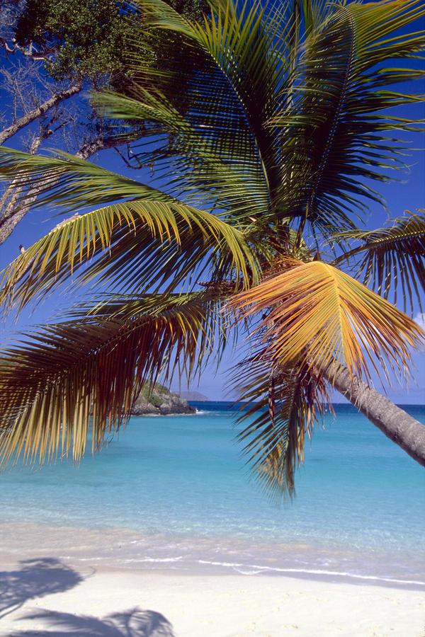 Palm Tree On A Caribbean Beach Photograph