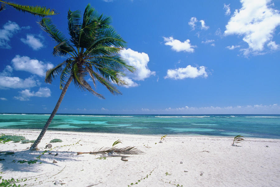 Tropical Beaches With Palm Trees Tropical Beaches With Palm