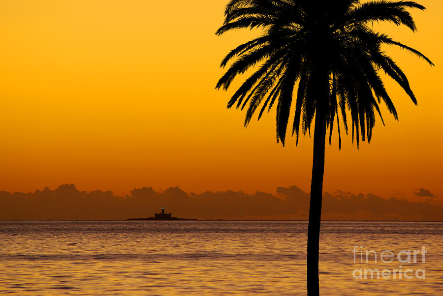 Palm Tree Sunset Photograph