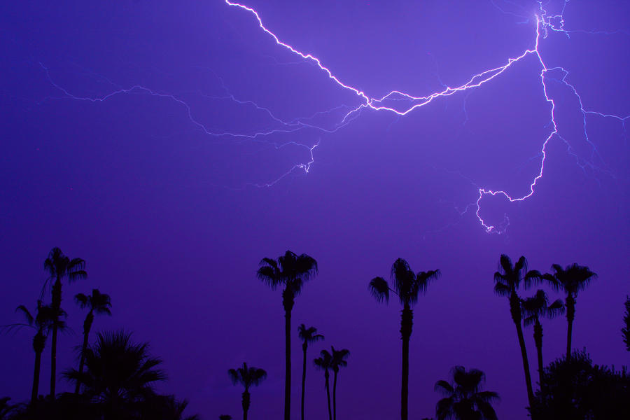 Palm Trees And Spider Lightning Striking Photograph